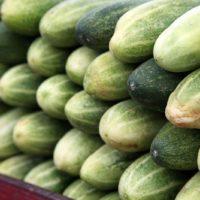 Cucumber price per kg