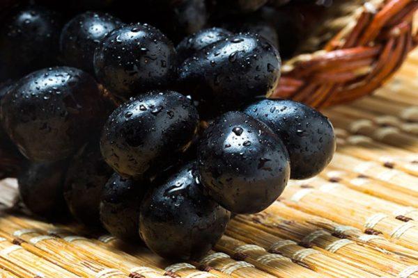 black grapes price in india