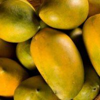get mango online